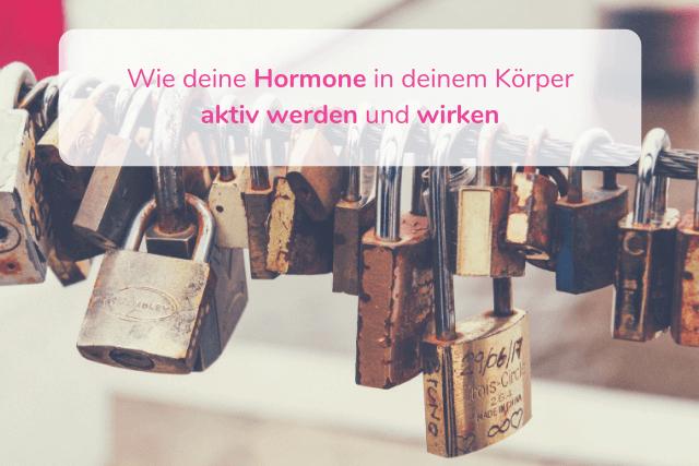 Wie deine Hormone in deinem Körper aktiv werden und wirken